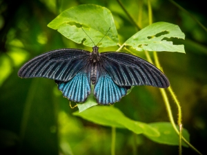 Butterfly in North Sumatra